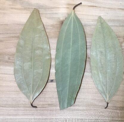 Cinnamon Cassia Leaves